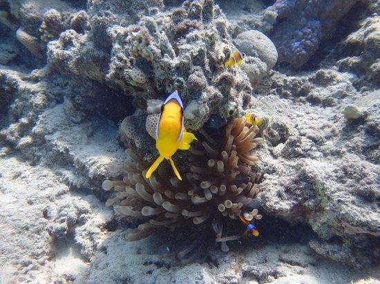 Tagesausflug Orange bay Insel Hurghada  | Hurghada Schnorcheln