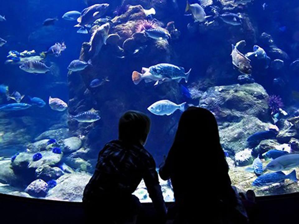 Ausflug zum Grand Aquarium ab Soma Bay/ Safaga