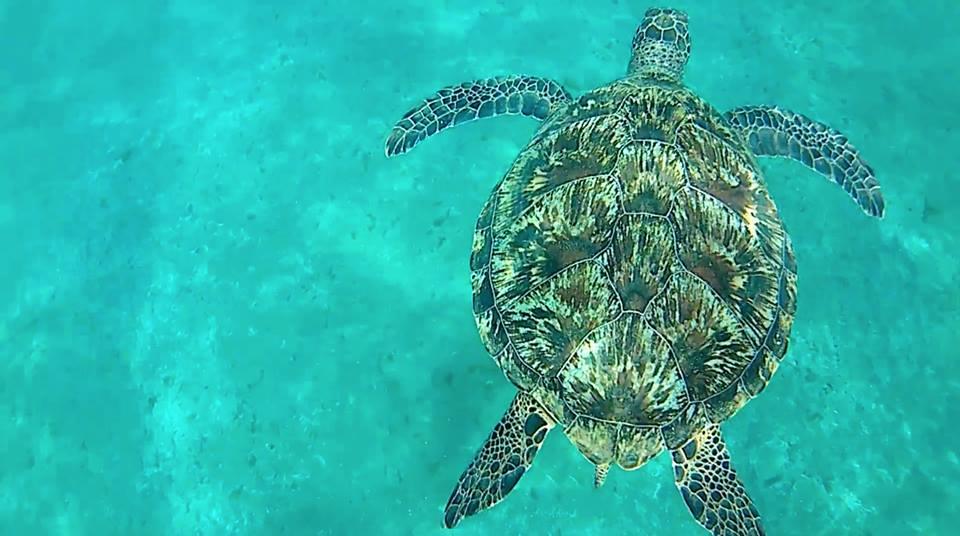 Ausflug zu den Schildkröten von Abu Dabbab ab El Gouna