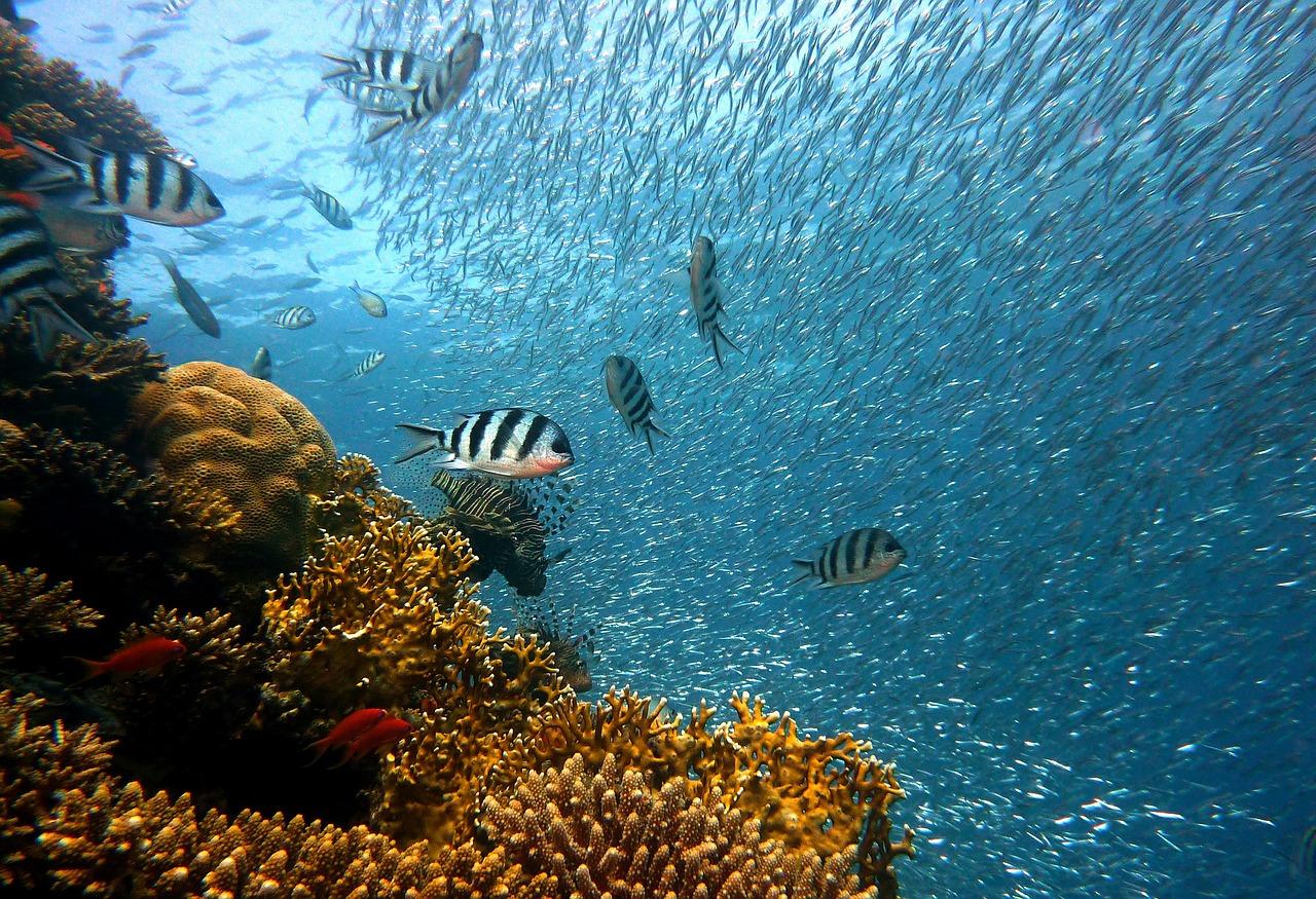Ausflug mit Nautilus-Katamaran