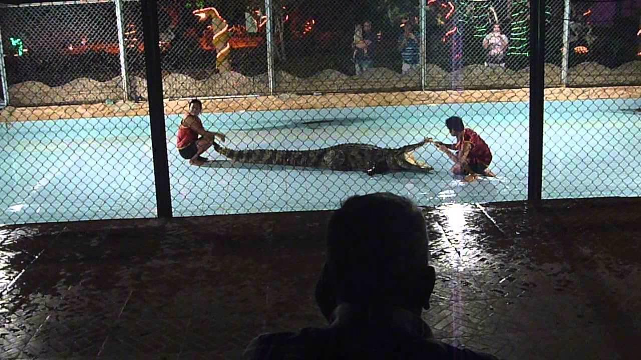 Schlangen- und Krokodilshow in Sharm El Sheikh