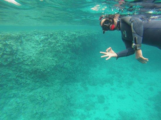 Ausflug zum Schnuppertauchen und Schnorcheln ab Sharm el Sheikh Hafen