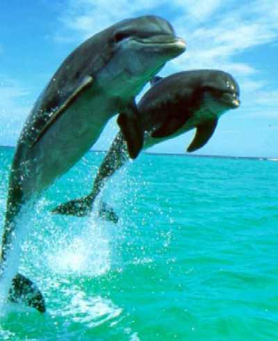 Schwimmen mit den Delfinen ab Sharm El Sheikh Hafen
