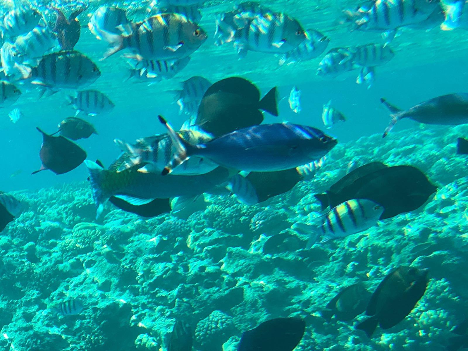 Giftun Island und Schnorcheln / Giftun Insel Ausflug ab El Gouna